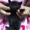 1ケ月半☆可愛い黒猫 麦ちゃん サムネイル3