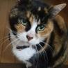 甘えん坊で穏やかな美猫です