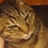 高齢猫のため、高齢応募者歓迎です(諸条件あり) サムネイル2