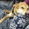 優しい性格の愛らしい子犬「ラスちゃん」 サムネイル3