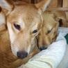 優しい性格の愛らしい子犬「ラスちゃん」 サムネイル4
