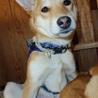 優しい性格の愛らしい子犬「ラスちゃん」 サムネイル5