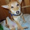 優しい性格の愛らしい子犬「ラスちゃん」 サムネイル6