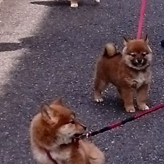 愛嬌たっぷりのぶさかわ系。昭和風味の3姉妹