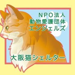 NPO法人 動物愛護団体エンジェルズ 猫の譲渡会