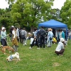犬とねこの里親募集会【高槻ジャズストリート共催】 サムネイル1