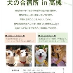 犬とねこの里親募集会【高槻ジャズストリート共催】 サムネイル2