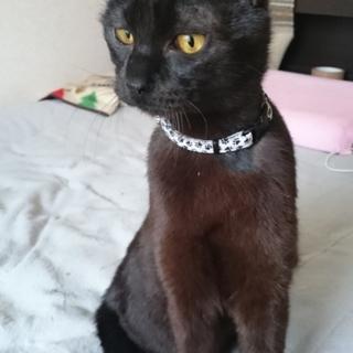 可愛い黒猫:くろまろ