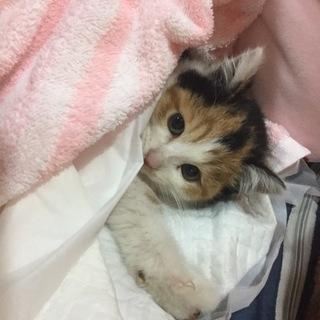 まりもちゃん。ハンディに負けない子猫。