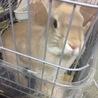 ウサギの里親募集します!