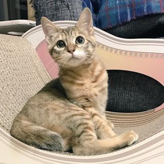 再募集  人好き猫好き シマシマ!(動画あり)