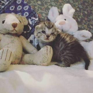 生後10日程の赤ちゃん猫ノンたん