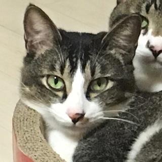 空前絶後のオ!超絶怒涛のやんちゃ猫!ここのつクン