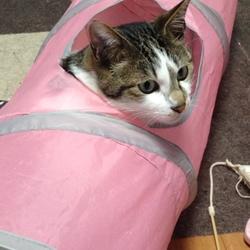 猫砂について
