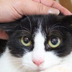 三重県桑名市 4月16日(日)第67回リトルパウエイド猫の譲渡会