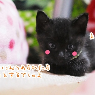 ミルク育ちの甘えん坊黒猫男子《桜人》