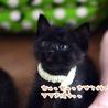 ミルク育ちの甘えん坊黒猫男子《桜人》 サムネイル2