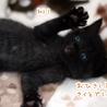 ミルク育ちの甘えん坊黒猫男子《桜人》 サムネイル4