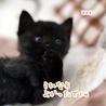 ミルク育ちの甘えん坊黒猫男子《桜人》 サムネイル5