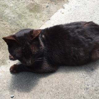 すっごく人懐っこい黒猫ちゃんの家族になりませんか?