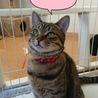 推定1歳 猫見知りゼロの正統派美人猫 りおん サムネイル2