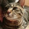 推定1歳 猫見知りゼロの正統派美人猫 りおん サムネイル6