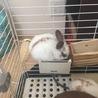 子ウサギの里親募集