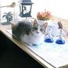 美猫♥アンナちゃん♥(=^・^=)生後5ヶ月