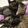 避妊済みメス猫達です。