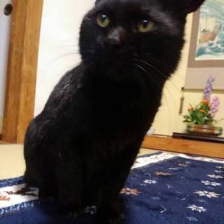 【保護】甘えん坊な黒猫の里親募集!