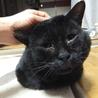 体重8kg!巨猫の豪ちゃん約5歳 サムネイル3