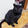 体重8kg!巨猫の豪ちゃん約5歳 サムネイル4