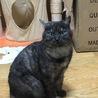 ブラックスモークの雑種猫です!