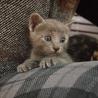 ※トライアル中です美猫6兄妹「ジジ」♪ サムネイル2