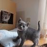 ※トライアル中です美猫6兄妹「ジジ」♪ サムネイル4