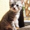 美猫6兄妹「キキ」♪ サムネイル3