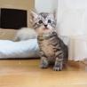 美猫6兄妹「キキ」♪ サムネイル4