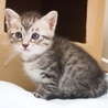 美猫6兄妹「キキ」♪ サムネイル6