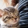 美猫6兄妹「ララ」♪ サムネイル4