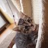 美猫6兄妹「ララ」♪ サムネイル5