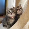 美猫6兄妹「ララ」♪ サムネイル7