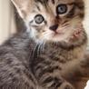 美猫6兄妹「ララ」♪ サムネイル3