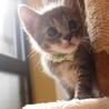 ※トライアル中です、美猫6兄妹「ルル」♪ サムネイル4
