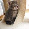 ※トライアル中です、美猫6兄妹「ルル」♪ サムネイル5
