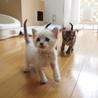 ※トライアル中です美猫兄妹「ミミ」♪ サムネイル3
