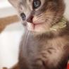 ※トライアル中です、美猫6兄妹「ルル」♪ サムネイル6