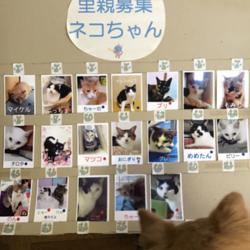 わんにゃん小梅保育園☆川越で犬猫譲渡会☆ 多数