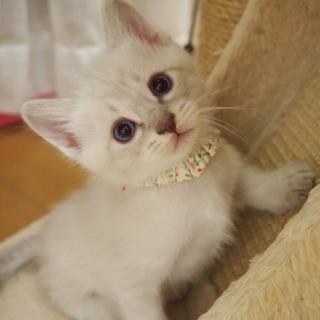※トライアル中です美猫兄妹「ミミ」♪