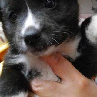 山口県野犬の子犬を保護しました。生後1か月女の子
