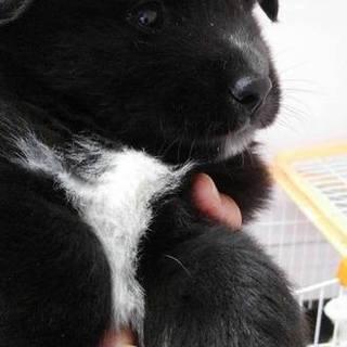 山口県野犬の子犬を保護しました。 生後2か月男の子